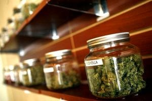 medical marijuana dispensaries shelf